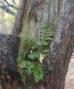 Varen op boom